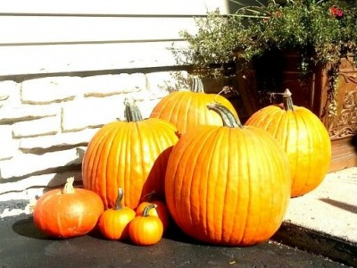 My Pumpkins